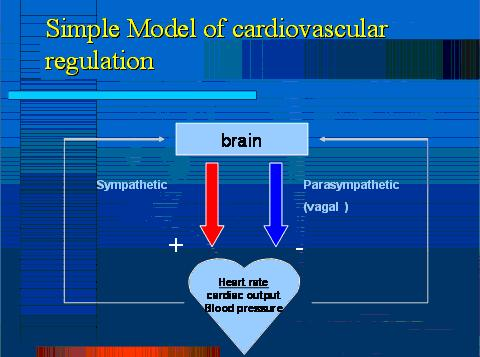 Simple Model of cardiovascular regulation